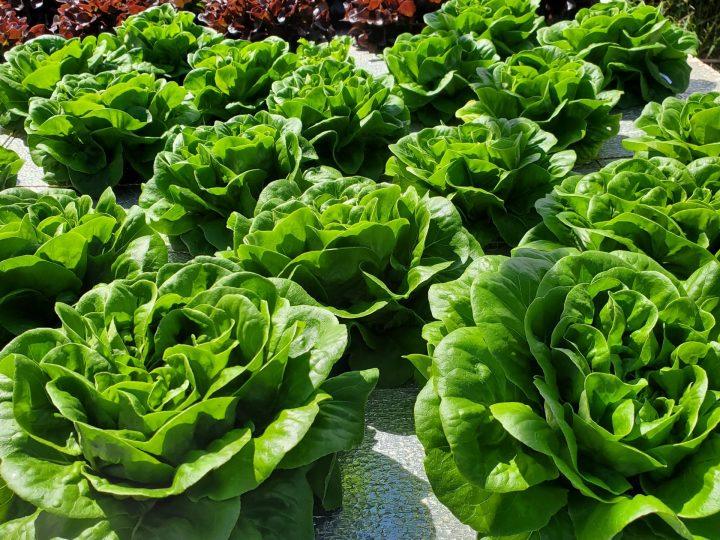 UHMC's Farmers Market: Farming For The Future