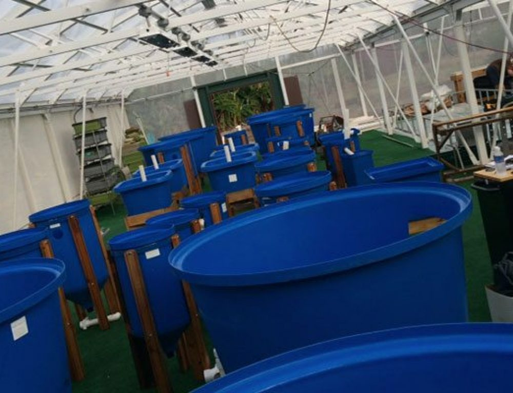 Aquaponics Entrepreneurship Courses at UHMC