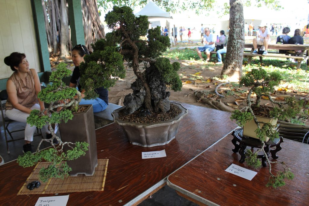 Bonsai Tree exhibit displaying trees as old as thirty years.